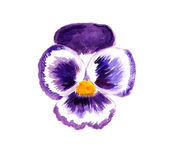 Pansy flower Stock Photography
