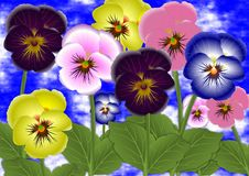 Pansy flowers Royalty Free Stock Photos