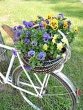 Pansy Flowers Imágenes de archivo libres de regalías
