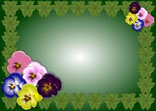 Pansy flowers background Stock Photography