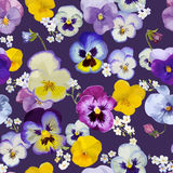 Pansy Flowers Background Stock Image