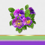 Pansy flowers card Royalty Free Stock Images