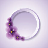 Pansy flowers and circle. Stock Image