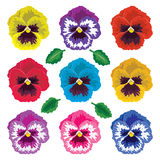Pansy flowers, vector  Royalty Free Stock Photography