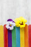 The pansy flowers on colorful wooden fence Royalty Free Stock Photography