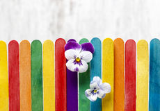 The pansy flowers on colorful wooden fence Royalty Free Stock Photo