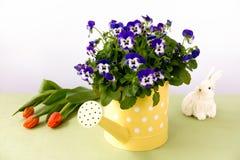 Pansy Flowers dans la boîte d'arrosage, les tulipes et le lapin de Pâques Photographie stock libre de droits