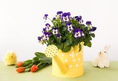 Pansy Flowers en regadera, tulipanes, conejito y polluelo Foto de archivo