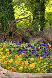 Pansy flowers garden in park Stock Images