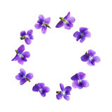 Pansy flowers isolated on white background Stock Images