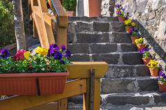 Pansy Flowers porpora e gialla Fotografia Stock Libera da Diritti