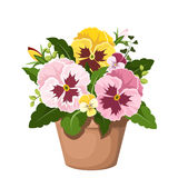 Pansy flowers in a pot. Vector illustration. Royalty Free Stock Photos