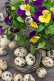 Pansy flowers and quail eggs Royalty Free Stock Photography