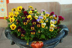 Pansy flowers in a vase street. On the street in a vase flowers are pansies Royalty Free Stock Images