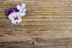 The pansy flowers on wooden background Stock Photos