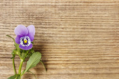 The pansy flowers on wooden background Stock Images