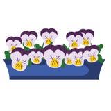 Pansy Garden Flowers in scatola Illustrazione di vettore Immagine Stock