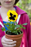 Pansy Gardener Royalty Free Stock Images