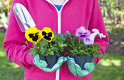 Pansy Gardener Royalty Free Stock Photography