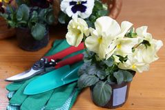 Pansy with gardening tools Stock Photos