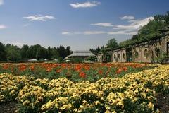 Pansy-Garten Stockfotos
