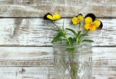 Pansy Jar Royalty Free Stock Image