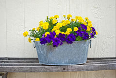 Pansy and marigold tub Stock Photography