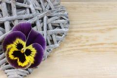 Pansy na drewnianym tle Obraz Royalty Free