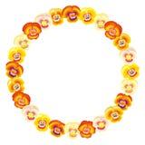 Pansy Orange Frame Circle royalty-vrije illustratie