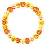 Pansy Orange Frame Circle Stock Photos