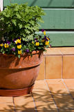 Pansy planter. Clay planter with pansies decorates an entrance Stock Photography