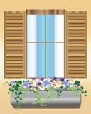 pansy pudełkowaty okno Obrazy Royalty Free