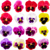 Pansy set isolated on white background. Viola tricolor red blue yellow macro closeup.  Royalty Free Stock Images