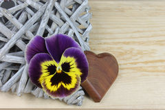 Pansy z drewnianym sercem Fotografia Stock