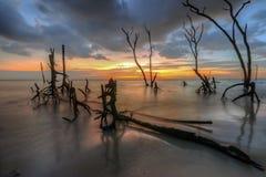 Pantai Kelanang,雪兰莪,马来西亚 免版税库存照片