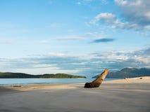 Pantai Tengah海滩在凌家卫岛,早晨光的马来西亚 库存照片