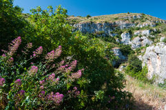 Pantalica landscapes. Valerian plant and green vegetation in Pantalica valley, Sicily, and a view of rocky tombs in the distance stock photography