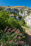 Pantalica landscapes. Valerian plant and green vegetation in Pantalica valley, Sicily, and a view of rocky tombs in the distance royalty free stock photos