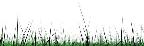 Pantalla ancha de la frontera de la hierba Foto de archivo