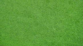 Pantalla de la hierba verde para el fondo fotografía de archivo libre de regalías