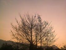 Pantalla de la puesta del sol de la silueta Fotos de archivo libres de regalías