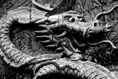Pantalla del dragón Imagenes de archivo