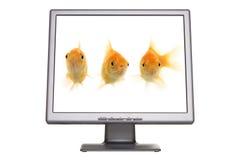 Pantalla del Goldfish Fotos de archivo libres de regalías