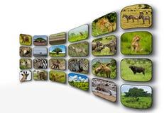 Pantalla plana Fotos de archivo libres de regalías