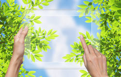 Pantalla táctil a la naturaleza en la PC de la tablilla. Fotografía de archivo
