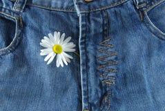 Pantalones vaqueros y margarita Fotografía de archivo libre de regalías