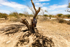 Pantaloni del lavoro su un albero Fotografia Stock Libera da Diritti