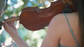 Pantaloni a vita bassa della giovane donna che giocano un violino che sta fra i rami di albero al tramonto video d archivio