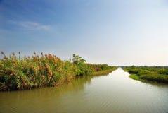 Pantanais Imagens de Stock