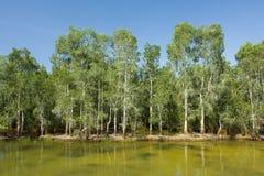 Pantanais Imagem de Stock Royalty Free